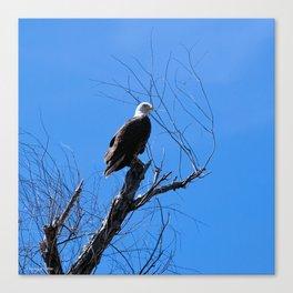 Clear Sight (Bald Eagle) Canvas Print