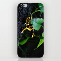Poison Dart Frog D. Leucomelas iPhone & iPod Skin