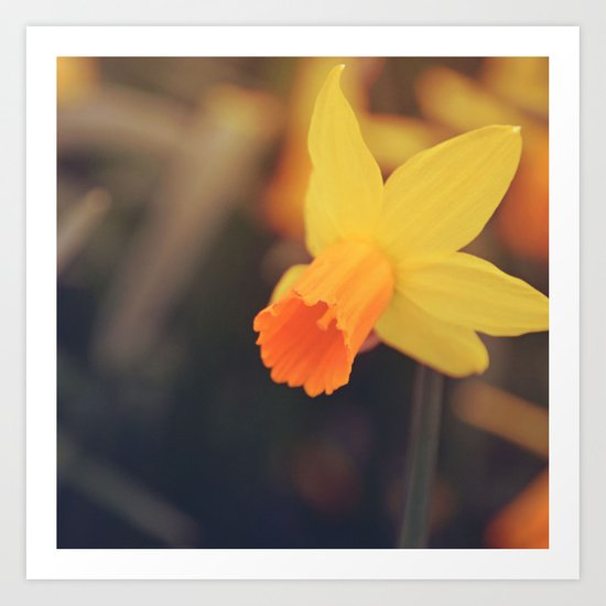Yellow Narcissus Art Print