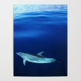 Dolphin and blues Poster