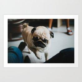 Needy Pug Art Print