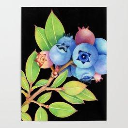 Wild Maine Blueberries Poster