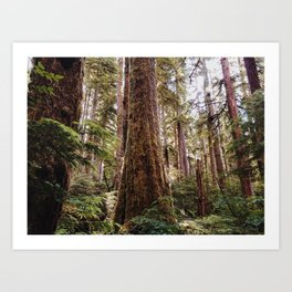 Redwood Sunshine Art Print