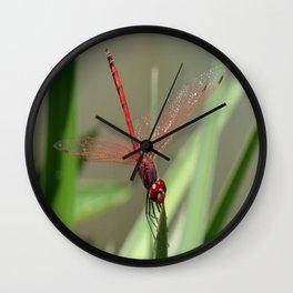 Beautiful Red Skimmer or Firecracker Dragonfly Wall Clock