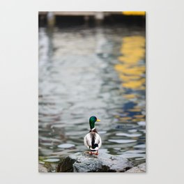 Duck standing on a rock Canvas Print