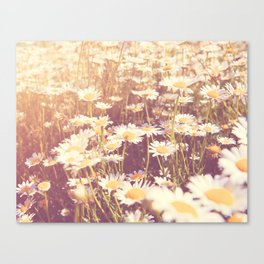 flowers. daisy photograph, We Need Each Other Canvas Print
