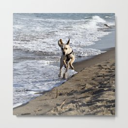 Flying Dog - Catania Beach - Sicily Metal Print