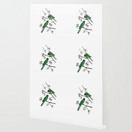 Ringneck Parrots Wallpaper