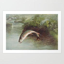 Leaping Brook Trout Art Print