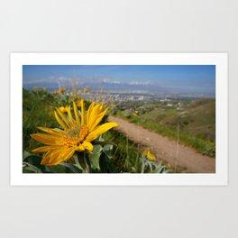 Sun Flower Looking On Art Print
