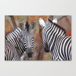 Back and forth - Africa wildlife Canvas Print