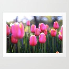 Spring Tulips Art Print