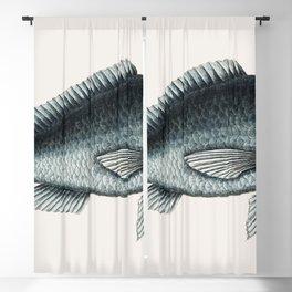 Blue Fish (Novacula Caerulea) from The natural history of Carolina Florida and the Bahama Islands (1 Blackout Curtain