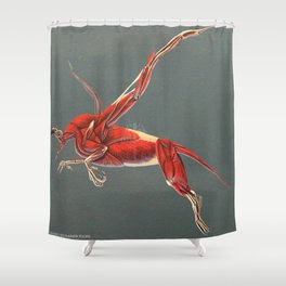 Gryphon Muscle Anatomy No Labels Shower Curtain