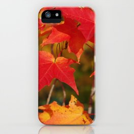 Fiery Autumn Maple Leaves 4966 iPhone Case