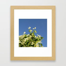 Dogwood #2 Framed Art Print
