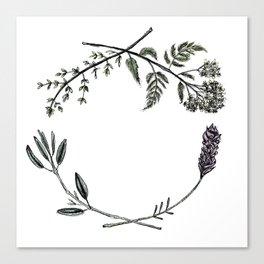 Yarrow, Sage, Lavender, Thyme Canvas Print