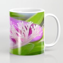Pink Polygala Myrtifolia in Macro with Green Background  Coffee Mug