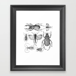 Vintage Beetle black and white drawing Framed Art Print