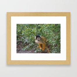 A friendly monkey Framed Art Print