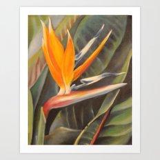 Bird of Paradise 3  Art Print