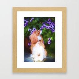 Cavalier King Charles Smelling Pansies Framed Art Print