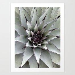 Cactus Flower in Nature Art Print