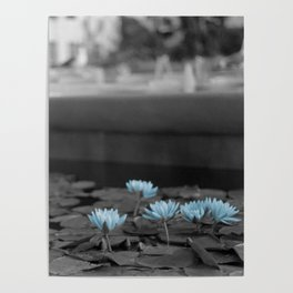 Lily Pad Blues Poster