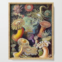Anemones by Haeckel (Sea Plants and Flowers) Serving Tray