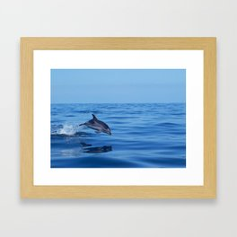 Spotted dolphin jumping in the Atlantic ocean Framed Art Print