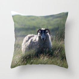 Scottish Sheep Throw Pillow