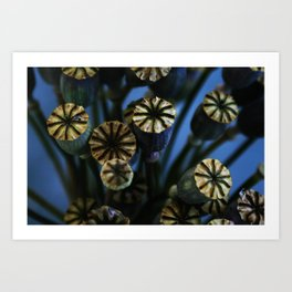 Poppy Flower Pods Bouquet Art Print