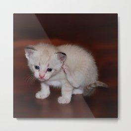 Smitten with a Kitten Metal Print