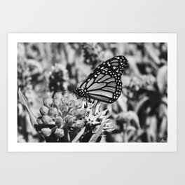 Butterfly kisses in Black and White  Art Print