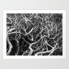tangled branches  Art Print