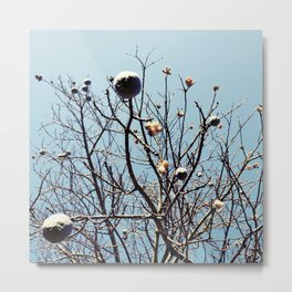 Like people, trees are all individuals Metal Print