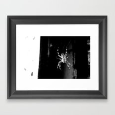 Spider in Amsterdam Framed Art Print