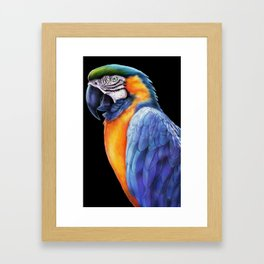 Macaw 2 Framed Art Print