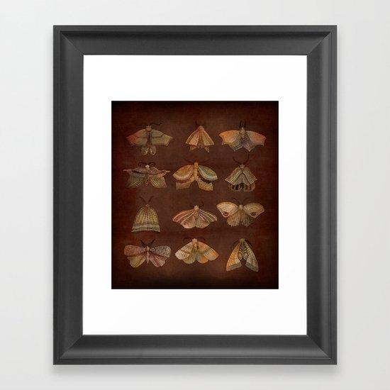 Moth Collector Framed Art Print