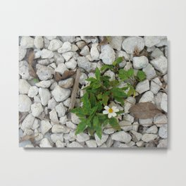 Flowers Always Make it  Metal Print