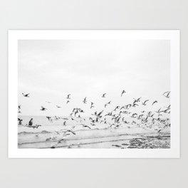 """Seagulls"" | Coastal black and white photo | Film photography | Beach Art Print"