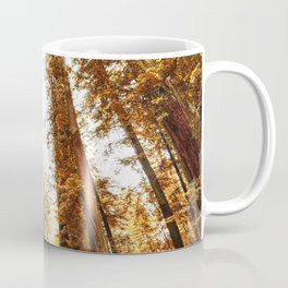 red woods forest in california Coffee Mug