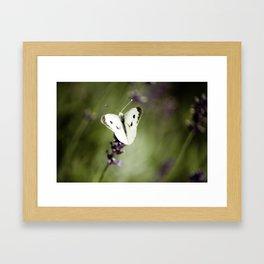 Butterfly Dream 1 Framed Art Print