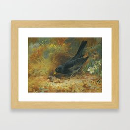 Archibald Thorburn (Scottish, 1860 - 1935) Blackbird, 1928 Framed Art Print