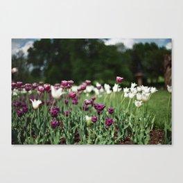 Film -- Tulips Canvas Print