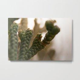 Resurrection moss Metal Print
