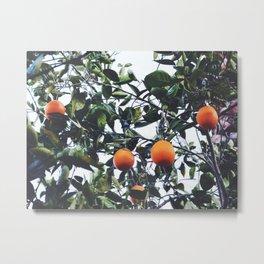 Naranjas Metal Print