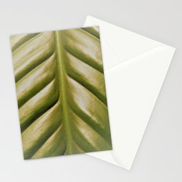 Peace Lily, fog Stationery Cards