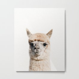 Baby Alpaca, Baby Animals Art Print By Synplus Metal Print