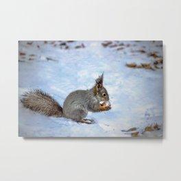 Walnut with snow Metal Print